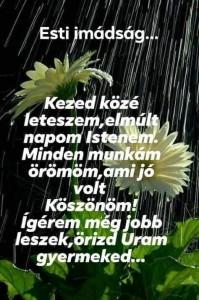 FB_IMG_1564805380863