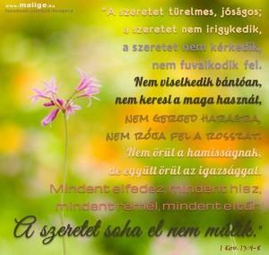FB_IMG_1564923315139